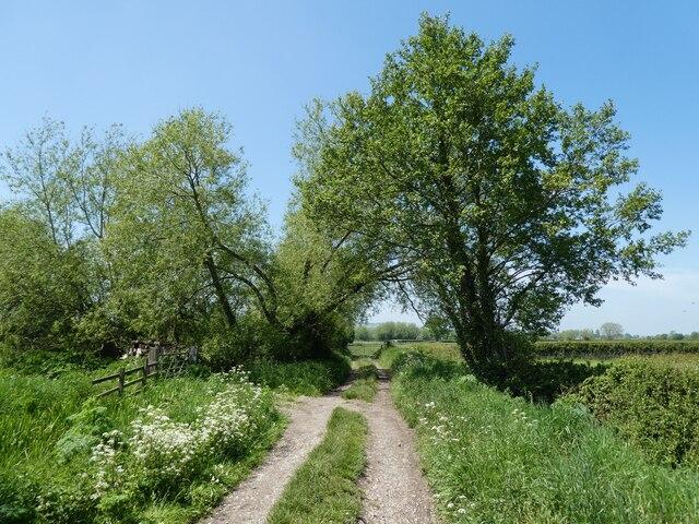 Farm track on Hearty Moor