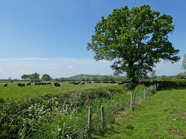 Farmland, on Hearty Moor