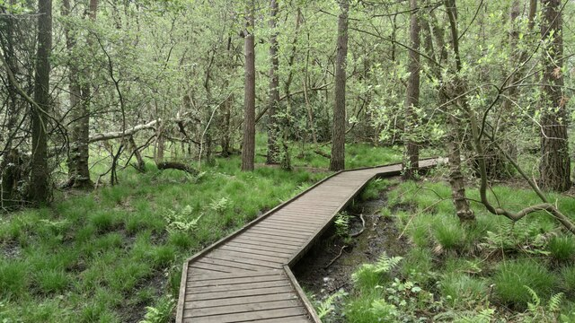 Walkway through Wildmoor Bottom