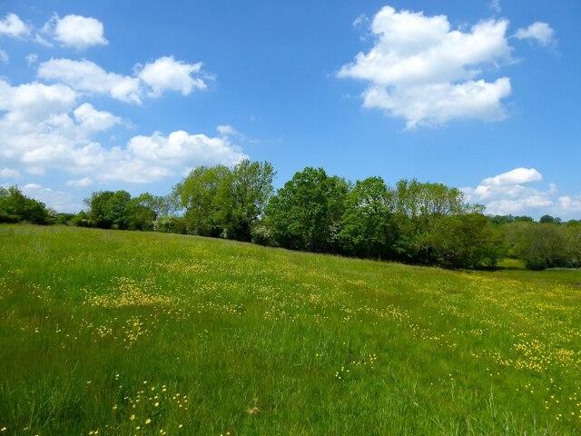 Heathmead Field