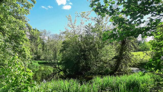 Wildlife pond in Ross-on-Wye