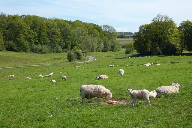 Pasture, Shalbourne