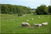 SU3064 : Pasture, Shalbourne by Andrew Smith