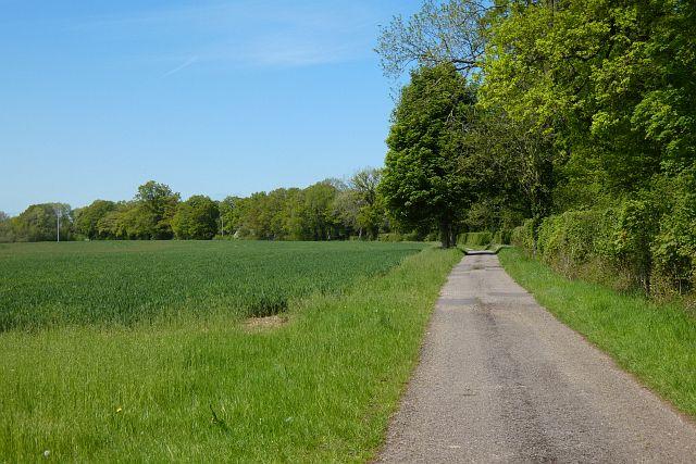 Road and farmland, Little Bedwyn
