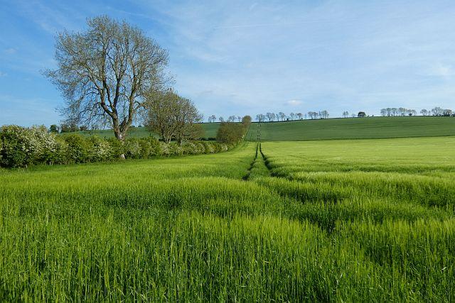 Farmland, Grafton