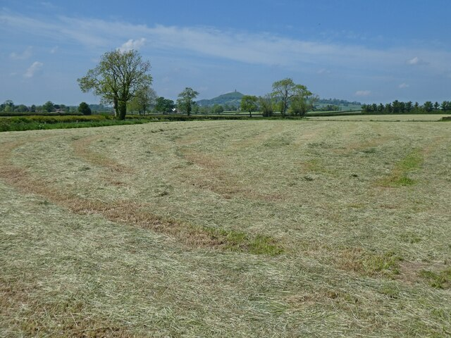 Newly mown field