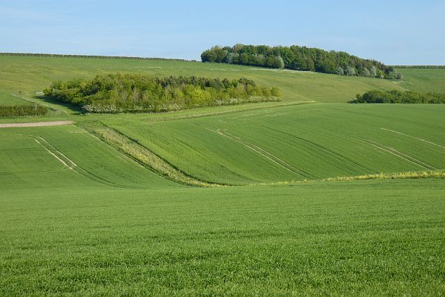 Farmland, Collingbourne Kingston