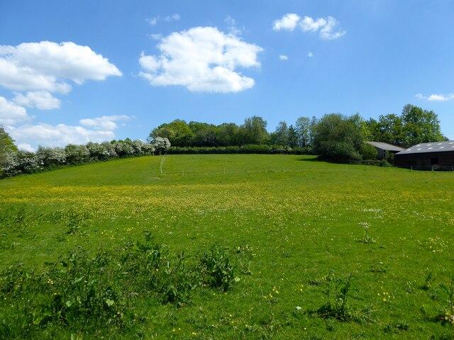 Guzzle Field/Little Hilly Field