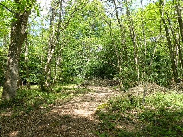 Heathersome Wood