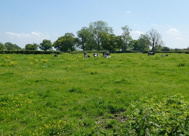 Pasture at Church Farm, Lottisham