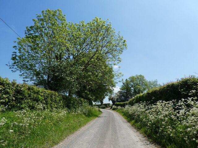 Stone Lane
