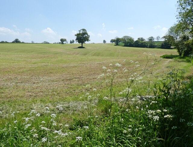 Newly mown field, near Parbrook