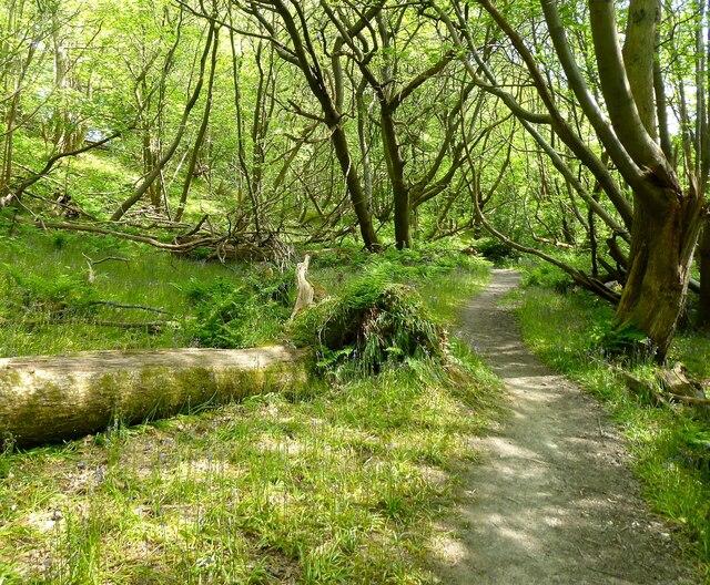 Coomb Wood