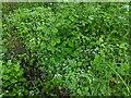 TF0820 : A lot of Sweet Wooduff by Bob Harvey