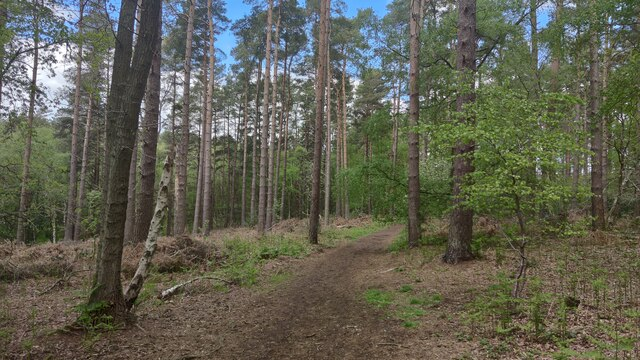 Woodland north of Camberley