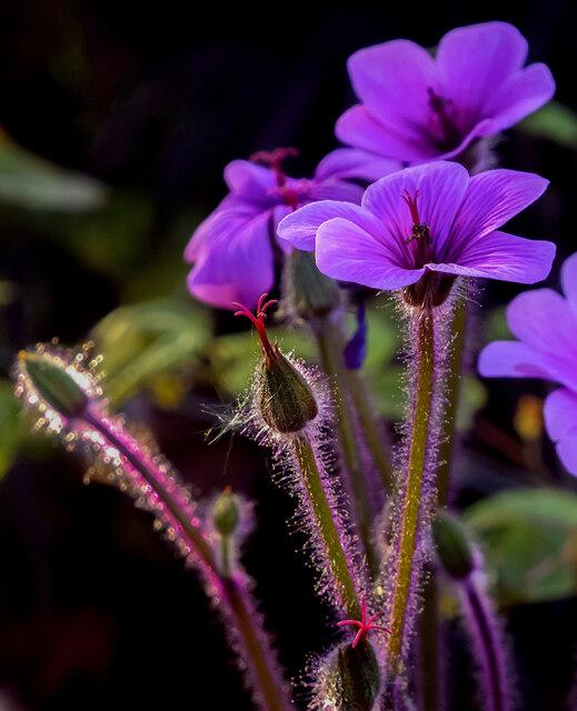 Garden beauties, spring 2021, 3