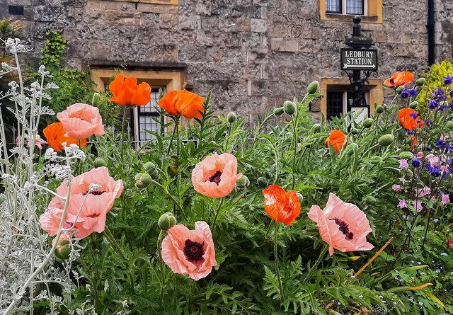 High Street floral display