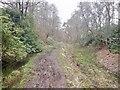 NS5380 : Cutting, Blane Valley Railway by Richard Webb