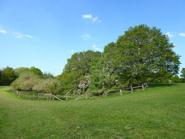 Old Pit, Grub Field