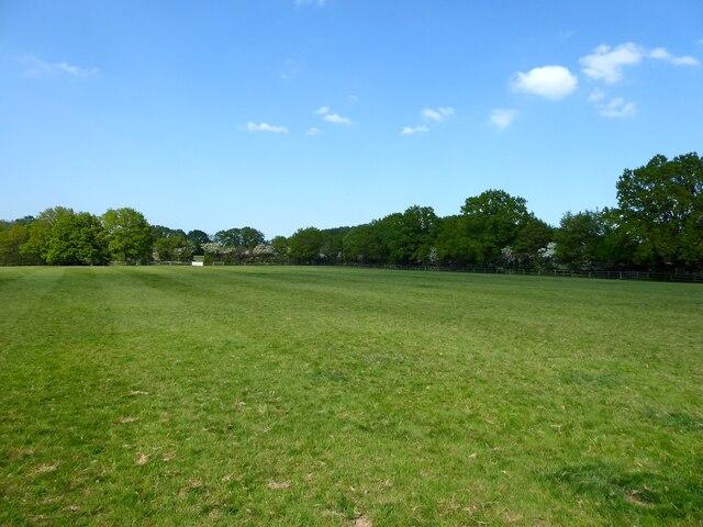 Grub Field
