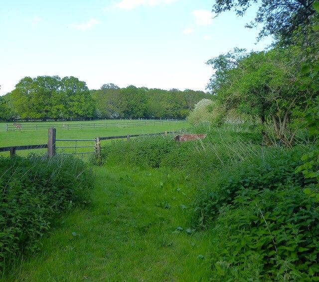 Further Field
