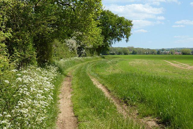 Track and farmland, Odiham