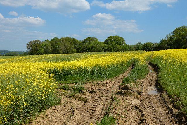 Farmland, Odiham