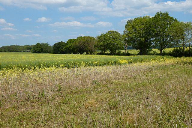 Farmland, Crondall