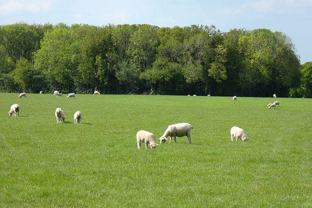 Pasture, Long Sutton