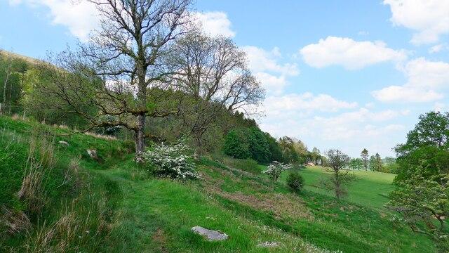 Path through Curroch Wood