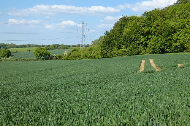 Farmland, Long Sutton