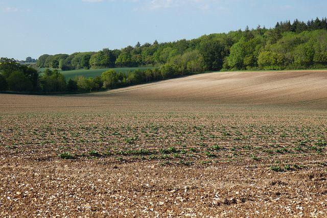 Farmland, South Warnborough