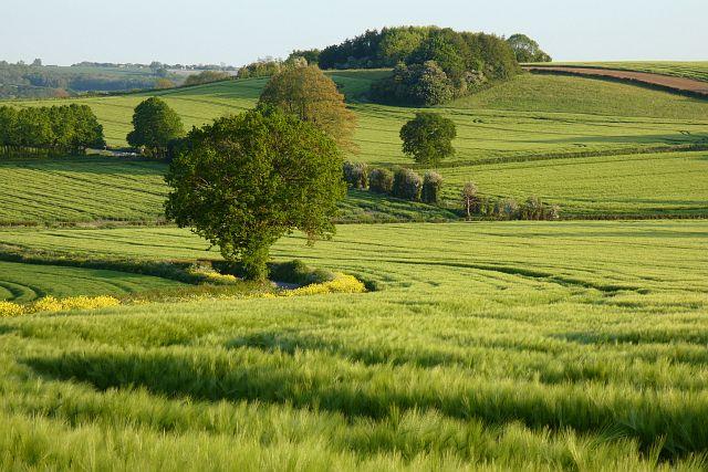 Farmland, Bentley