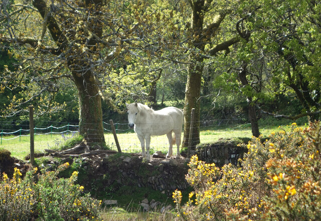 White Horse on a Wall
