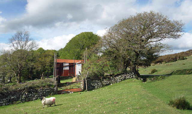 A sheep and a shed