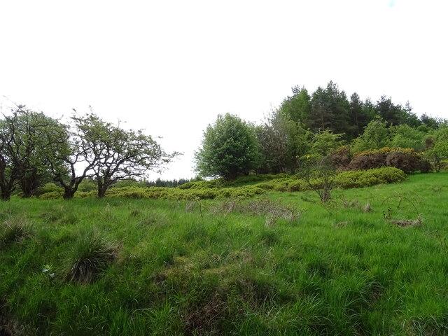 Woodland above Sergeantlaw Road