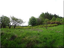 NS4660 : Woodland above Sergeantlaw Road by JThomas