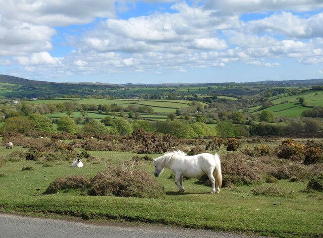 White Horse by the Road
