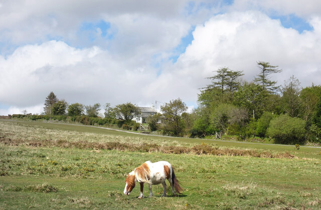 Pony at Higher Spring