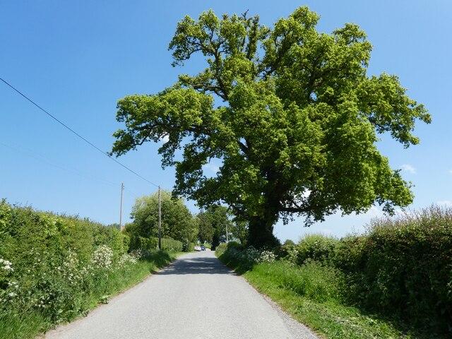Minor road to Wraxall