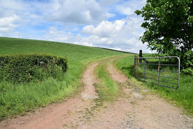 An open field, Drumragh