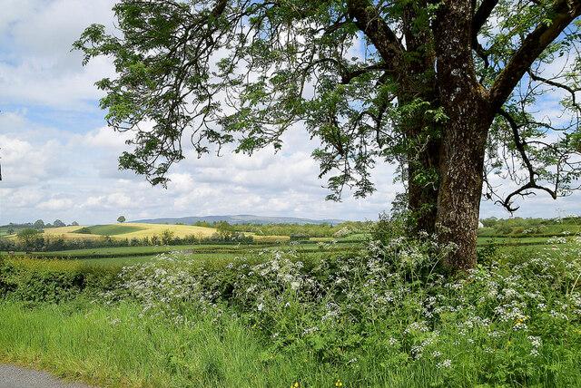 Tree and hemlock, Freughmore