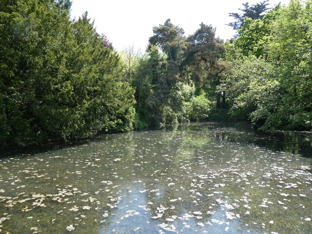 Pond at Pylle Manor