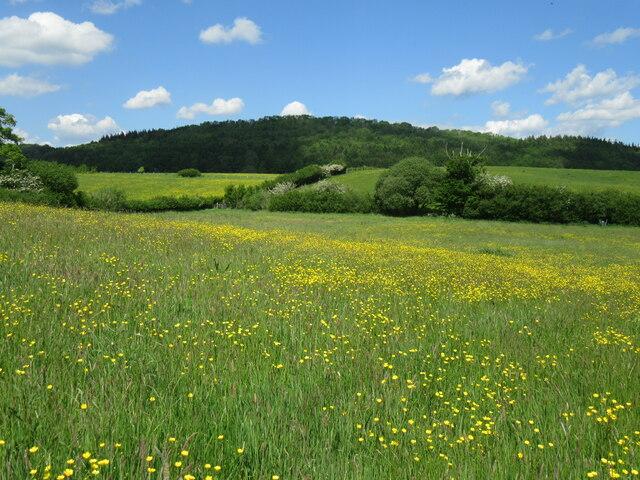 Near Hessle Hill