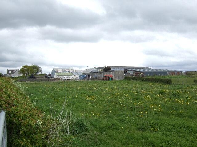 Grazing towards Holm Farm