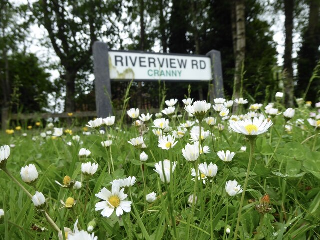 Daisies along Riverview Road