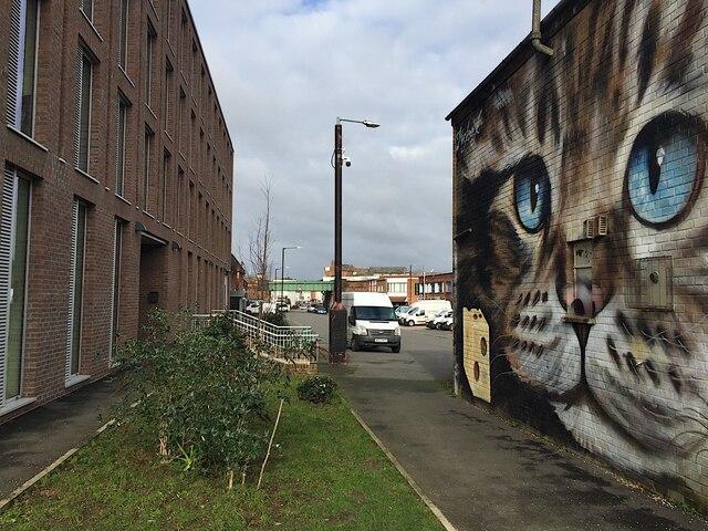 Cat, south Leamington street art 2/2