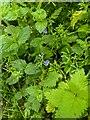 TF0820 : Little flowers by Bob Harvey