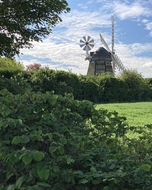 Fulbourn: hedge and windmill