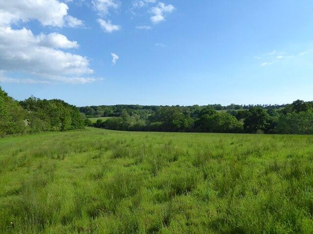 Way Field